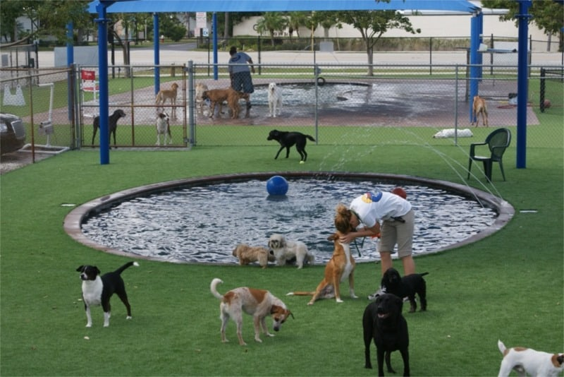 Dog Boarding Kennels In Homestead Florida